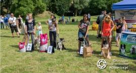rodzinny-piknik-z-psem